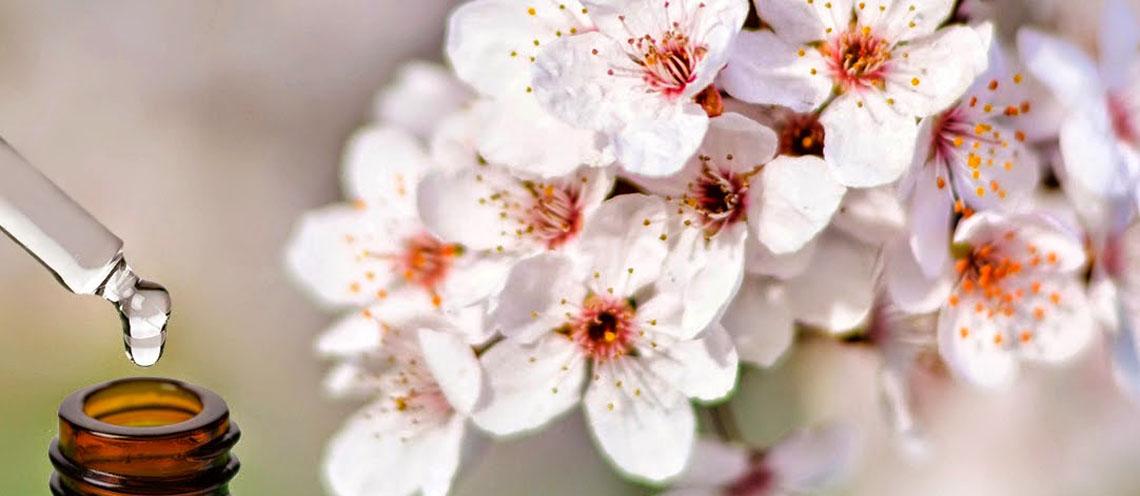 La mieleria nel bosco fiori di bach ritrovare l for Fiori con la l