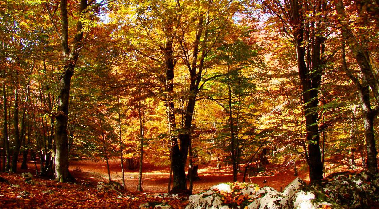 autunno livata mieleria