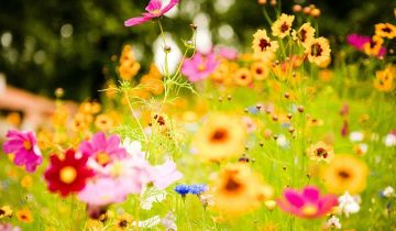 api primavera mieleria nel bosco