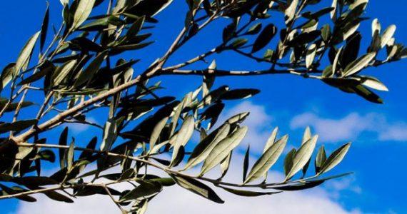domenica-delle-palmela mieleria nel bosco
